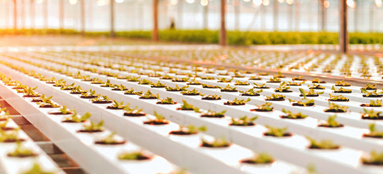 Bayer steigt in Vertical Farming-Startup ein   Bild Header