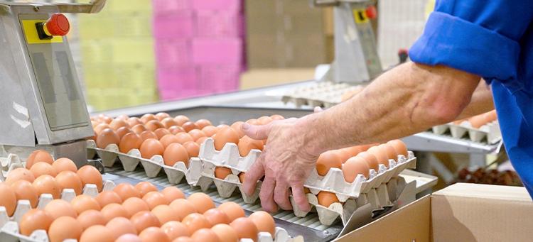 Geflügelwirtschaft befürchtet Wettbewerbsnachteile   Bild Header